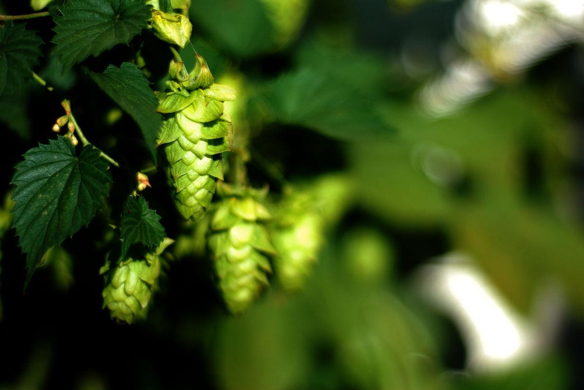Пиво Leffe - описание всех видов, вкуса и аромата – Как правильно пить