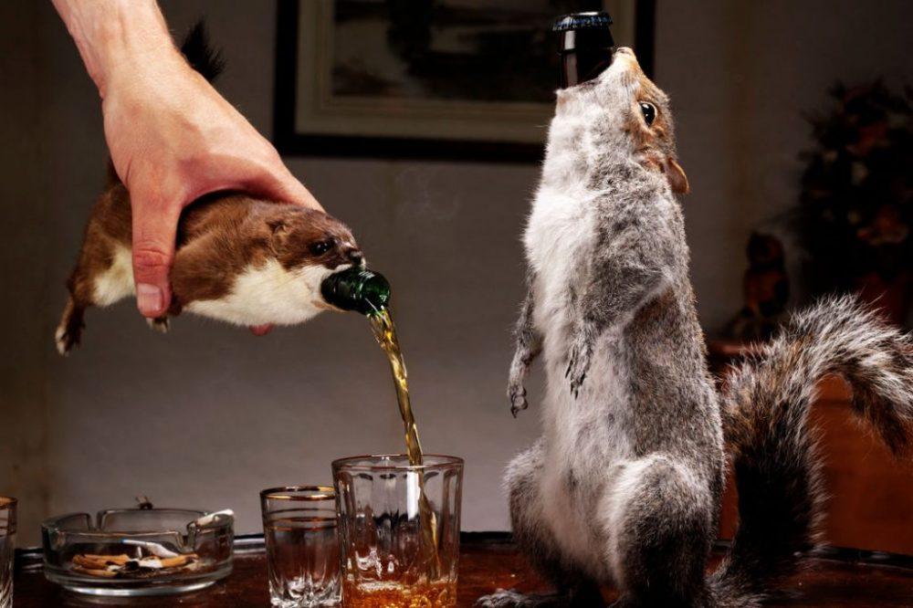 Фото: brewdog.com