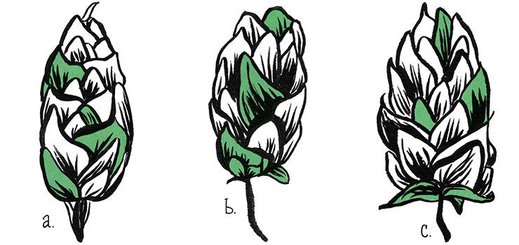Новозеландские хмели