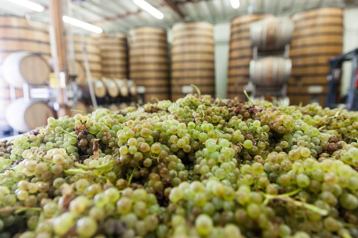 Виноград на пивоварне Bruery Terreux